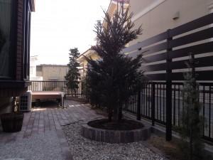 シンボルツリーのドイツトウヒ